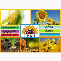 Науково-виробнича фірма ГРАН пропонує посівний матеріал соняшнику гібридів стійких