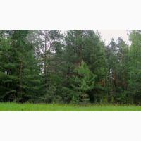 Продам земельный участок Вышгород Катюжанка 13 га