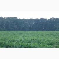 Продам земельный пай 426 соток в селе Уляники
