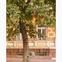 Продам фасадное помещение 180 м центр Одессы под пекарню кондитерскую кафе 50 кВт