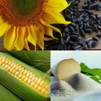 Науково-виробнича фірма «ГРАН» пропонує посівний матеріал