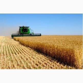 Продам зерновой комплекс в Одесской обл элеватор 13000 т. 2 га