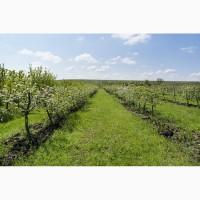 Земельный участок осг, садоводство. От 3000 у.е. /га. От 2 до 100 га