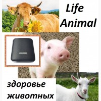 Антипаразитарная программа для домашних животных в устройстве Life Animal