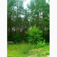 Продам 50 соток под застройку в с.Боденьки, ул.Полесская, примыкают к лесу