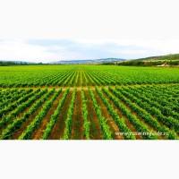 Виноградники, грушевые и яблочные сады, сельхоз земля